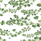Thyme texture — Stok Vektör