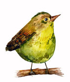 Watercolor bird — Foto de Stock