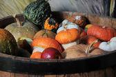 Vegetable marrow — Stock Photo