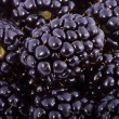 Background from blackberry berries — Stock Photo