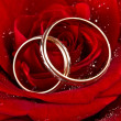 Flower a rose, two wedding rings — Stock Photo