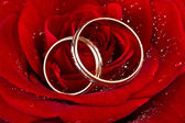 Flower a rose, two wedding rings — Stockfoto