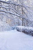 Camino de madera cubierto de nieve — Foto de Stock