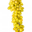 The branch of grapes isolated, on a white — Stock Photo