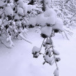 Snow covered tree branch in winter park — Stock Photo