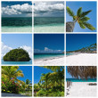 Beautiful tropic landscapes theme collage — Stock Photo #27849921