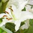 Bouquet from lilies, a flower close up — Stock Photo