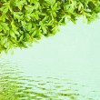 Stock Photo: Reflect green leaves in water