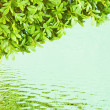 Reflect green leaves in the water — Stock Photo