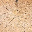 Wood cut structure close up — Stock Photo #27936599
