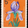 BULGARIA - CIRCA 1965: A post stamp printed in Bulgaria shows iris sibirica, circa 1965 — Stock Photo