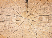 Wood cut structure close up — Stock Photo