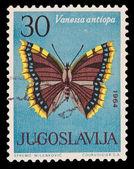 南斯拉夫-大约 1964年: 在南斯拉夫打印戳记表明斯普雷莫 milenkovic 拿破仑 s.a.凡妮莎 antiopa,大约 1964年 — 图库照片