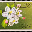 Republic of Poland - CIRCA 1972: A stamp printed in the Republic of Poland, A.Balcerzak, Jablon Malus Mill, PWPW-72, circa 1972 — Stock Photo