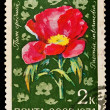 USSR - CIRCA 1974: A stamp printed in the USSR, image show Paeonia, circa 1974 — Stock Photo #27944547