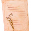 Old paper and the dried flowers — Stockfoto