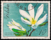 Republic of Poland - CIRCA 1972: A stamp printed in the Republic of Poland, A.Balcerzak, Magnolia Japonska Kobus DC, PWPW-72, circa 1972 — Stock Photo