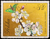 Republic of Poland - CIRCA 1972: A stamp printed in the Republic of Poland, A.Balcerzak, Czeresnia Prunus Avium L., PWPW-72, circa 1972 — Stock Photo