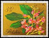 Republic of Poland - CIRCA 1972: A stamp printed in the Republic of Poland, A.Balcerzak, Kasztanowiec Czerwony Aesculus Garnea Hayne, PWPW-72, circa 1972 — Stock Photo