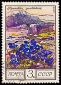 USSR - CIRCA 1976: A stamp printed in the USSR, image shows flowers of Gentianaceae (Gentiana angulosa) against mountains — Stok fotoğraf