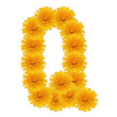 Letter Q from bright dandelion on the white — Stock Photo