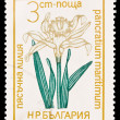 BULGARIA - CIRCA 1965: A post stamp printed in Bulgaria shows pancratium maritimum, circa 1965 — Stock Photo