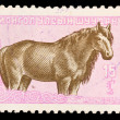 MONGOLIA - CIRCA 1985: A stamp printed in the Mongolia, shows horse, circa 1985 — Stock Photo #28001769
