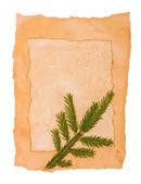 Eski kağıt ve kürk-ağaç — Stok fotoğraf