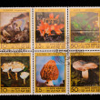 DPR KOREA - CIRCA 1986: A stamp printed in the DPR KOREA, shows Various kinds of mushrooms,  circa 1986 — Lizenzfreies Foto
