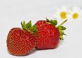 Strawberr, camomile — Stock Photo