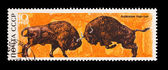 USSR - CIRCA 1969: A stamp printed in the USSR, shows Belovezhsky dense forest, bison, circa 1969 — Stock Photo