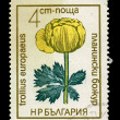 BULGARIA - CIRCA 1968: A stamp printed in Bulgaria showing trollius europaeus, circa 1968 — Zdjęcie stockowe