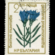 BULGARIA - CIRCA 1968: A stamp printed in Bulgaria showing gentiana pneumonanthe, circa 1968 — Stockfoto