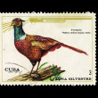 CUBA - CIRCA 1970: A stamp printed in the CUBA, shows Faisan,  circa 1970 — Stockfoto