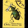 CUBA - CIRCA 1980: A stamp printed in the CUBA, shows Entomofauna Calosoma Splendida,  circa 1980 — Lizenzfreies Foto