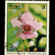Stock Photo: CUB- CIRC1973: stamp printed in CUBA, shows Vandmiss joaquin var rose maria, circ1973