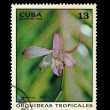 CUBA - CIRCA 1973: A stamp printed in the CUBA, shows Dendrobium Hibrido,  circa 1973 — Stock Photo