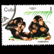 CUBA - CIRCA 1979: A stamp printed in the CUBA, shows Chimpance,  circa 1979 — Lizenzfreies Foto