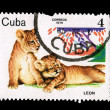 CUBA - CIRCA 1979: A stamp printed in the CUBA, shows leon,  circa 1979 — Lizenzfreies Foto