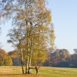 Stock Photo: Birches, autumn, rest