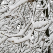 Snow covered tree branch in winter park — Foto de Stock