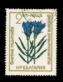 BULGARIA - CIRCA 1968: A stamp printed in Bulgaria showing gentiana pneumonanthe, circa 1968 — Stok fotoğraf
