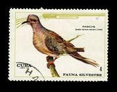 CUBA - CIRCA 1970: A stamp printed in the CUBA, shows Rabiche, circa 1970 — Stock Photo