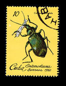 CUBA - CIRCA 1980: A stamp printed in the CUBA, shows Entomofauna Calosoma Splendida, circa 1980 — Stock Photo