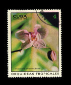 CUBA - CIRCA 1973: A stamp printed in the CUBA, shows Phalaenopsis schilleriana Reichb, circa 1973 — Stock Photo