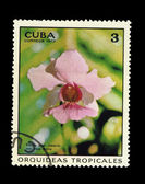 CUBA - CIRCA 1973: A stamp printed in the CUBA, shows Vanda miss joaquin var rose maria, circa 1973 — Stock Photo
