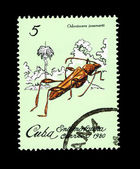CUBA - CIRCA 1980: A stamp printed in the CUBA, shows Odontocera josemartii, circa 1980 — Stock Photo