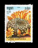 CAMBODIA - CIRCA 1986: A stamp printed in Cambodia shows Rebutia marsoneri, circa 1986. — ストック写真