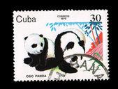 CUBA - CIRCA 1979: A stamp printed in the CUBA, shows oso panda, circa 1979 — Stockfoto