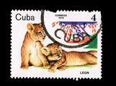 CUBA - CIRCA 1979: A stamp printed in the CUBA, shows leon, circa 1979 — Stock Photo